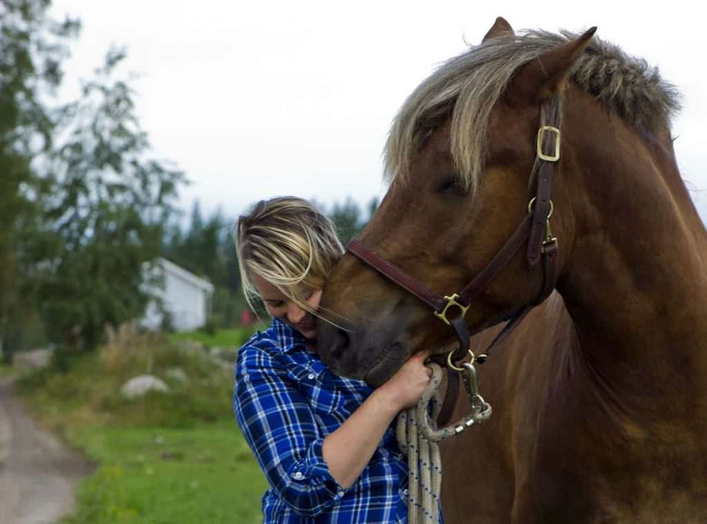 Woimahevonen taitotalli | Sosiaalipedagoginen hevostoiminta, Mindfulness, hevostalli | Söörmarkku, Pori